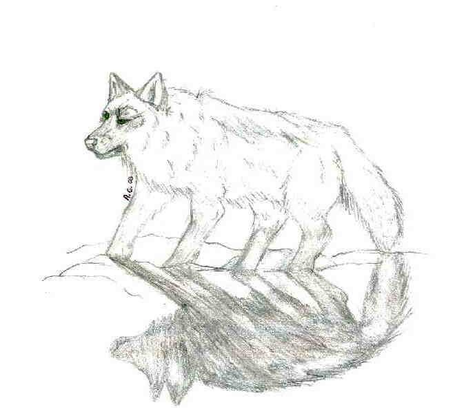 Una Wolf